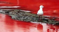 Bondi Beach's algae bloom turned the water BLOOD RED!