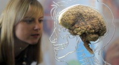 Kerrie Grist looks at a real human brain being displayed as part of new exhibition at the @Bristol attraction on March 8, 2011 in Bristol, England.