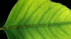 This bionic leaf can replace fertilizers