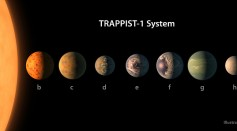 Digital illustration released on Feb, 22, 2017 shows an artist's concept of the exoplanets in the TRAPPIST-1 planetary system, based on available data about the planets' diameters, masses and distances from the host star.