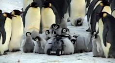 Rover Penguin