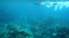 Snorklers are seen exploring the reef on January 14, 2012 at Lady Elliot Island, Australia