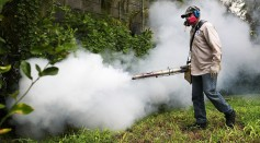 Mosquitoes lose their legs after having contact with insecticide, but researchers discovered that they are still able to bite humans afterward.