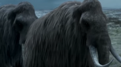 Woolly Mammoth: The Autopsy