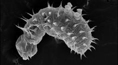 Teens & Scientist Talk Ant Larvae