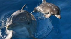Dolphin Gives Birth At Six Flags Animal Discovery Park