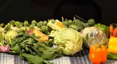 Domesticated Mustard Brassica oleracea