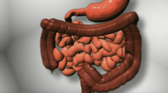 Salmonella Entering the Intestinal Tract