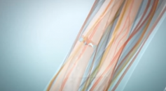 Healing Process of Bone Fracture