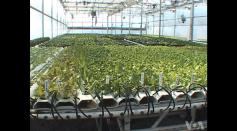 Grow Organic Plants Fast with Hydroponic Gardening