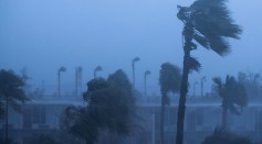 Palm trees blow in the rain and wind from Hurricane Matthew, October 7, 2016 in Ormond Beach, Florida