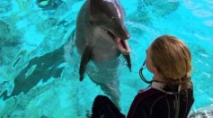Underwater Interactive Touchpad For Dolphins