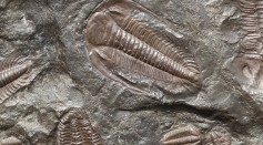 Fossils on the ground