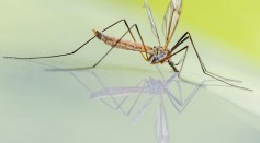 Experts Warn Against the Expansion of Mosquito- and Tick-Borne Diseases in Warmer Climate