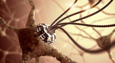 Nanobiotechnology: Is It Safe?
