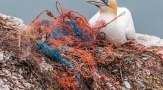 Bird with plastics nest