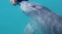 Research Discovered Dolphins Form Friendship through Shared Interest like Humans