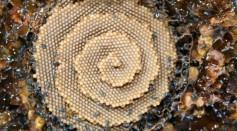 Spiral Nest