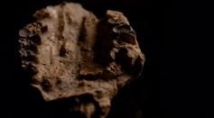 Mammalian Skull Unearthed