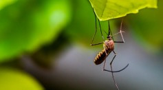 Invincible Insects