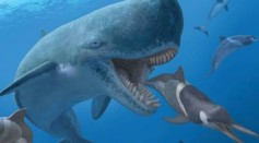 A Whale of a Tale About Why Leviathans Got so Big