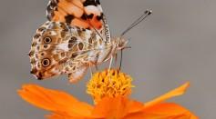 Paramount Pollinators