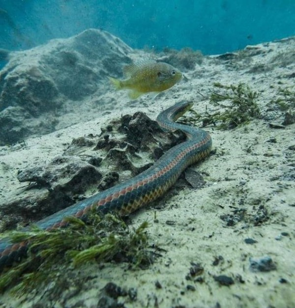 Rare Rainbow Snake Spotted For the First Time in 50 Years in a Florida Forest