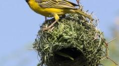 Birds: World's Best Engineers