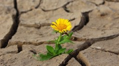 Sunny Spring May Have Depleted Moisture from Soil Bringing Severe Droughts