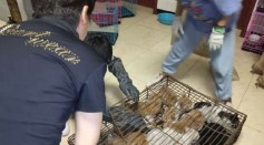 [VIDEO] 700 Stolen Cats Crammed in Rusty Cages Rescued in Northern China Before Being Served As Food