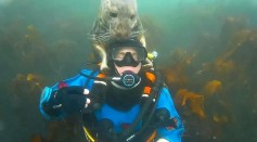 Photobomber of the Year: Diver Gets An Unexpected Cuddle From A Seal Underwater