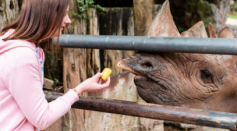 Zoos Are Shut Down Due to the Pandemic Leaving Owners With Difficult Decisions for Animal Welfare