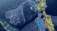 Scientists Discover a Brain Protein Structure for New Drug Developments