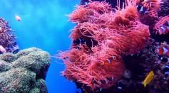 soft coral garden Greenland