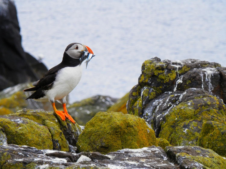 Làm thế nào mà loài chim biển phát triển khả năng đi qua không khí và nước? Thông tin chi tiết mới được tiết lộ