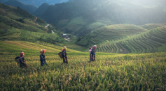 Researchers Offer Solutions That Tackle Climate Change, Land Degradation and Food Security Simultaneously