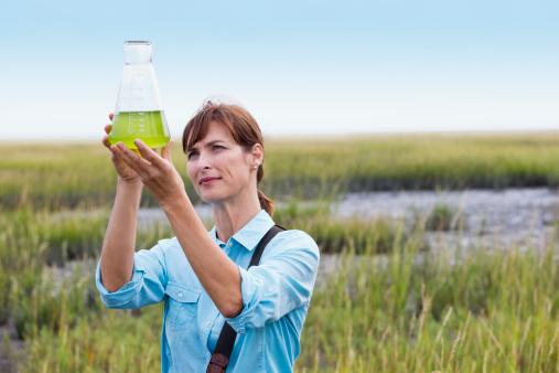 Tảo vắt sữa có thể sản xuất nhiên liệu sinh học thân thiện với môi trường