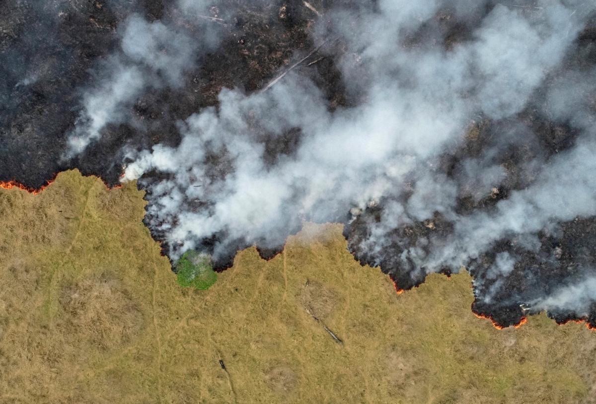 Phá rừng Amazon của Brazil đã tăng lên 25%, dữ liệu chính thức được hiển thị