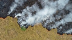 Brazilian Amazon Deforestation Increases To 25%, Official Data Showed