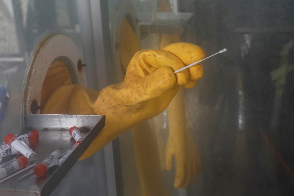 [PHOTOS] Khỉ đột ở Sở thú Miami Thử nghiệm bệnh ho gà mũi coronavirus