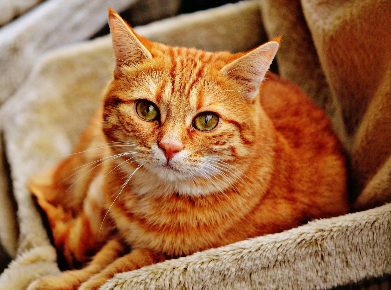 Làm thế nào thuần hóa mèo bắt đầu ở Trung Âu?  Các nhà khoa học có thể có câu trả lời