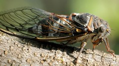 A Natural Water Repellent Nanostructure is Found on Insects