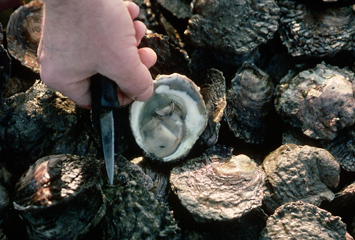 Fortified Shellfish May Reduce Vitamin Deficiency Around the World