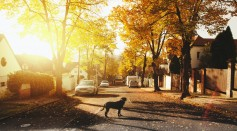 Communal Safety: 5 Tips To Improve The Safety Of Your Neighbourhood