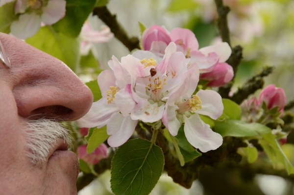 Science Times - Elder people who retain sense of smell are at less risk of dementia
