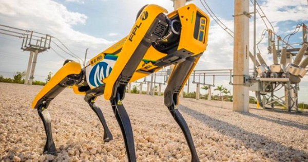 Science Times - The Engineer's Best Friend: An Inside Look at Ford's Robotic Dog, Fluffy