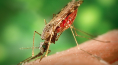 West Nile Cases to Increase in L.A. Coastal Area Due to Climate Change