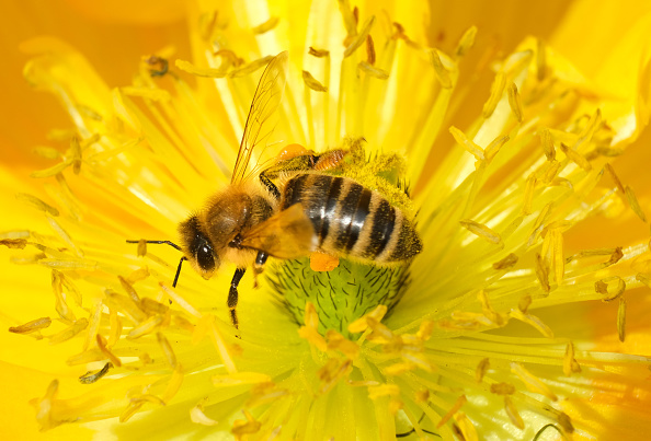 May 20 Is World Bee Day