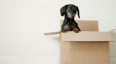 Signs It May be Time to Relocate to a New Home
