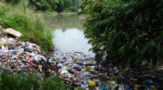 Microplastics Are Found in Internal Organs
